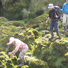 Carol Masheter scrambling over moss-covered karst